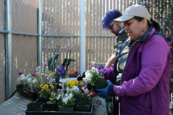 Mirna Juarez and Corbin Hall depotting plants in preparation for the plant sale. Photo by Catlan Nguyen