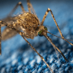 Do Mosquitoes Have Teeth? Get Ready for AZ's Mosquito-Biting Season!