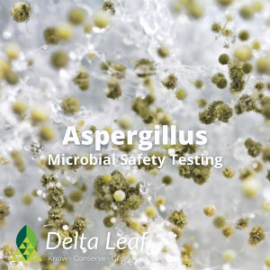 Aspergillus Microbial Safety Testing for Cannabis and Hemp Products