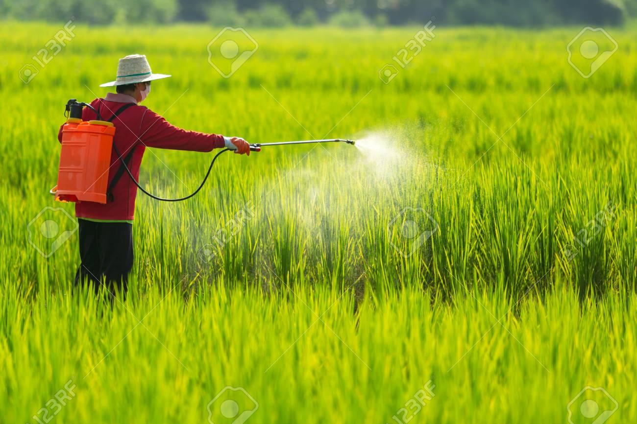 ထိုင်းနိုင်ငံမှာ စိုက်ပျိုးရေးသုံး ဓာတုဆေးဝါးတွေကို တားမြစ်ဖို့ ပြင်ဆင်နေ