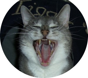 angry-cat-angry-phone-rep-delta-airlines-delta-points-blog