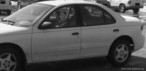 dog in car photo