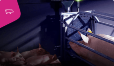 Farrowing-Feeding-with-Wireless-Activator