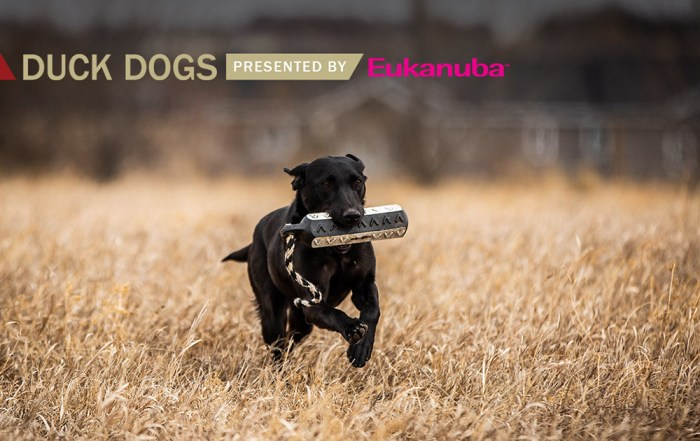 Delta Duck Dog tip of the week presented by Eukanuba shows a black lab retrieving a training toy