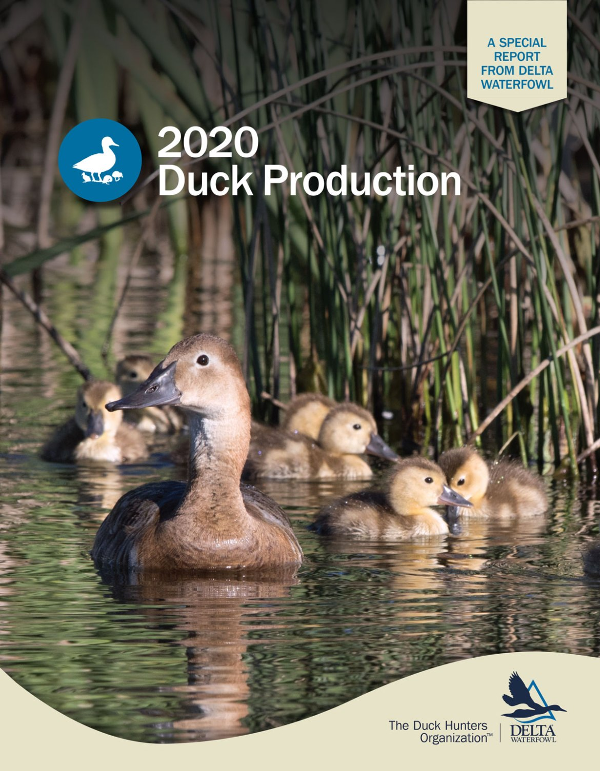 Duck Production 2020 report cover. Image shows a mother hen with her ducklings paddling on the water. Outdoors and in nature.