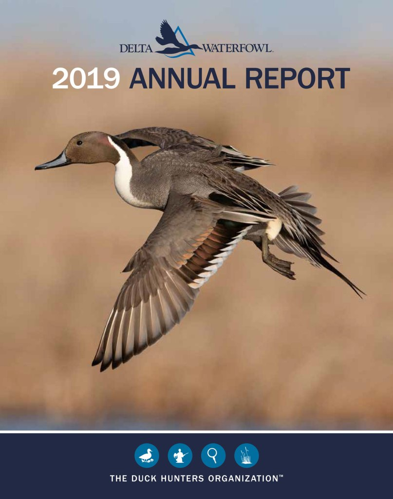 Delta Waterfowl 2019 Annual Report cover. Image shows a pintail duck flying over a fall nature scene.
