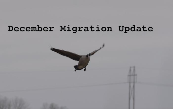December 2020 Migration Update