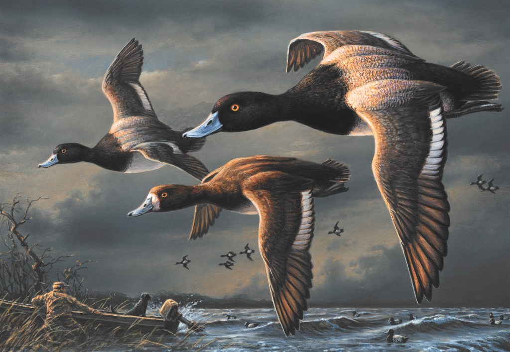 james hautman acrylic painting of a flock of lesser scaup