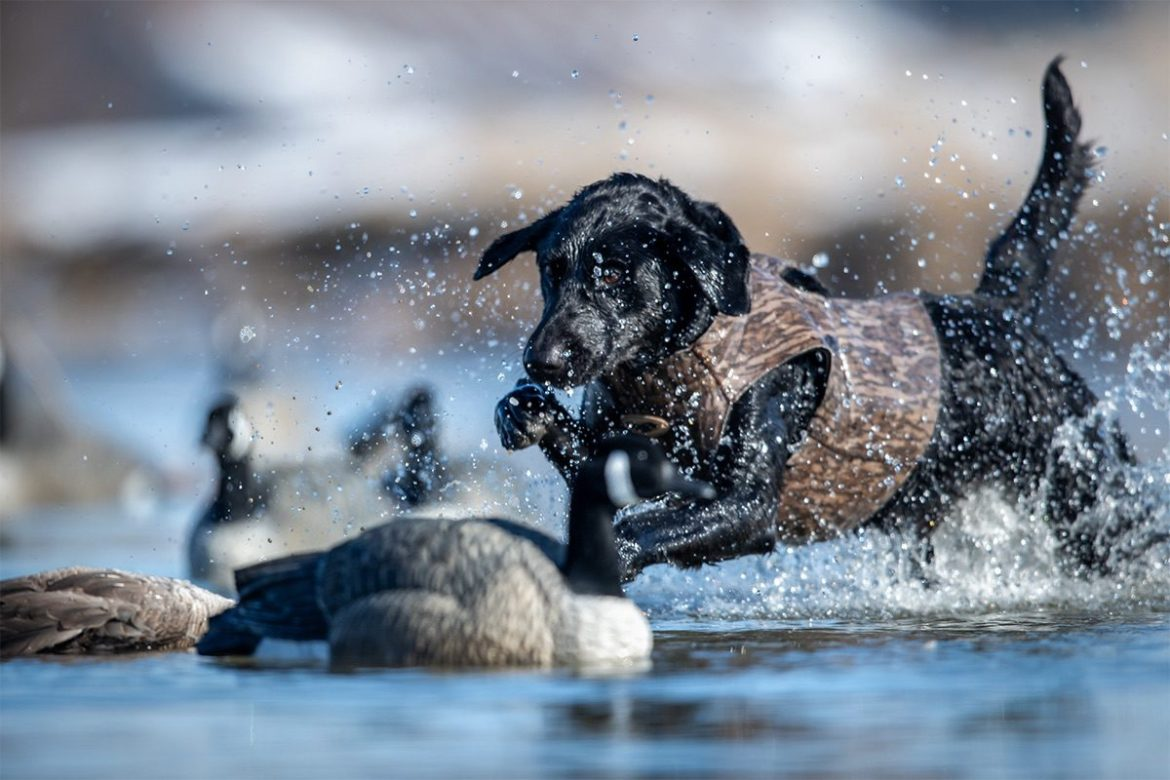 Delta Waterfowl Photography winner In Line of Sight