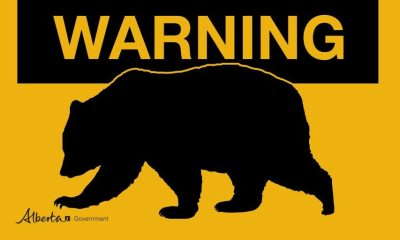 warning bear