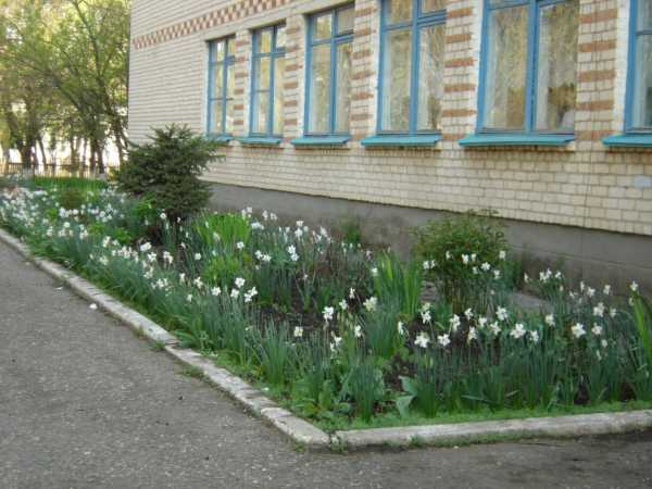 Дизайн школьного двора фото – Идеи ландшафтного дизайна ...