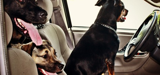 pups driving