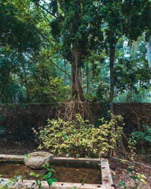 Selva : Katanchel