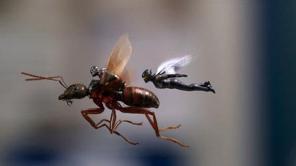 Box Office Wrap Up: Ant-Man and Wasp Sting Box Office.