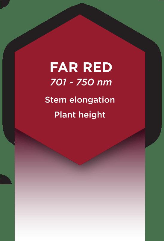 FARREDLIGHT-17
