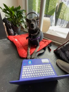 Dog wearing a headset and sitting behind a laptop