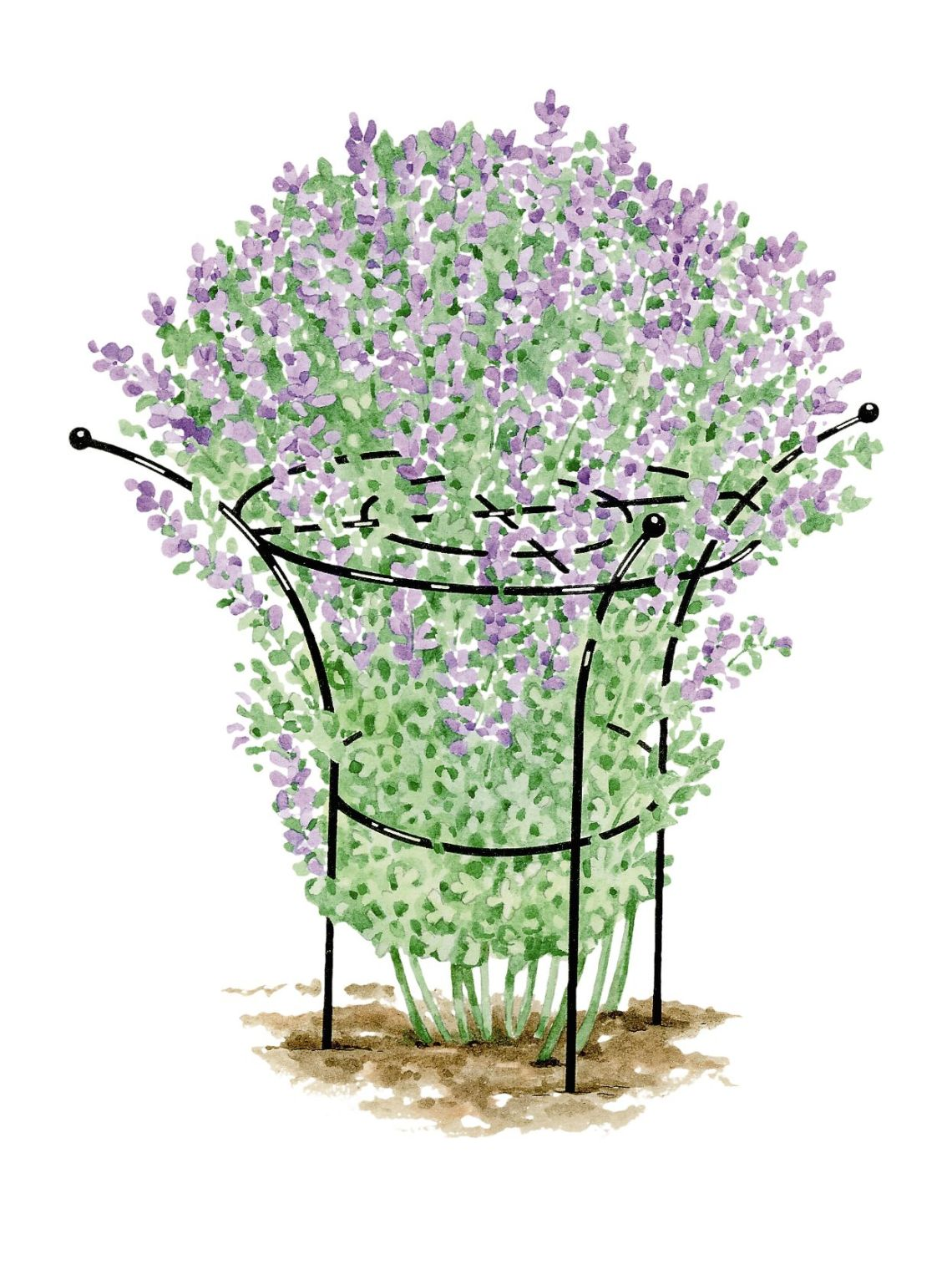 Image Result For Gardeners Supply