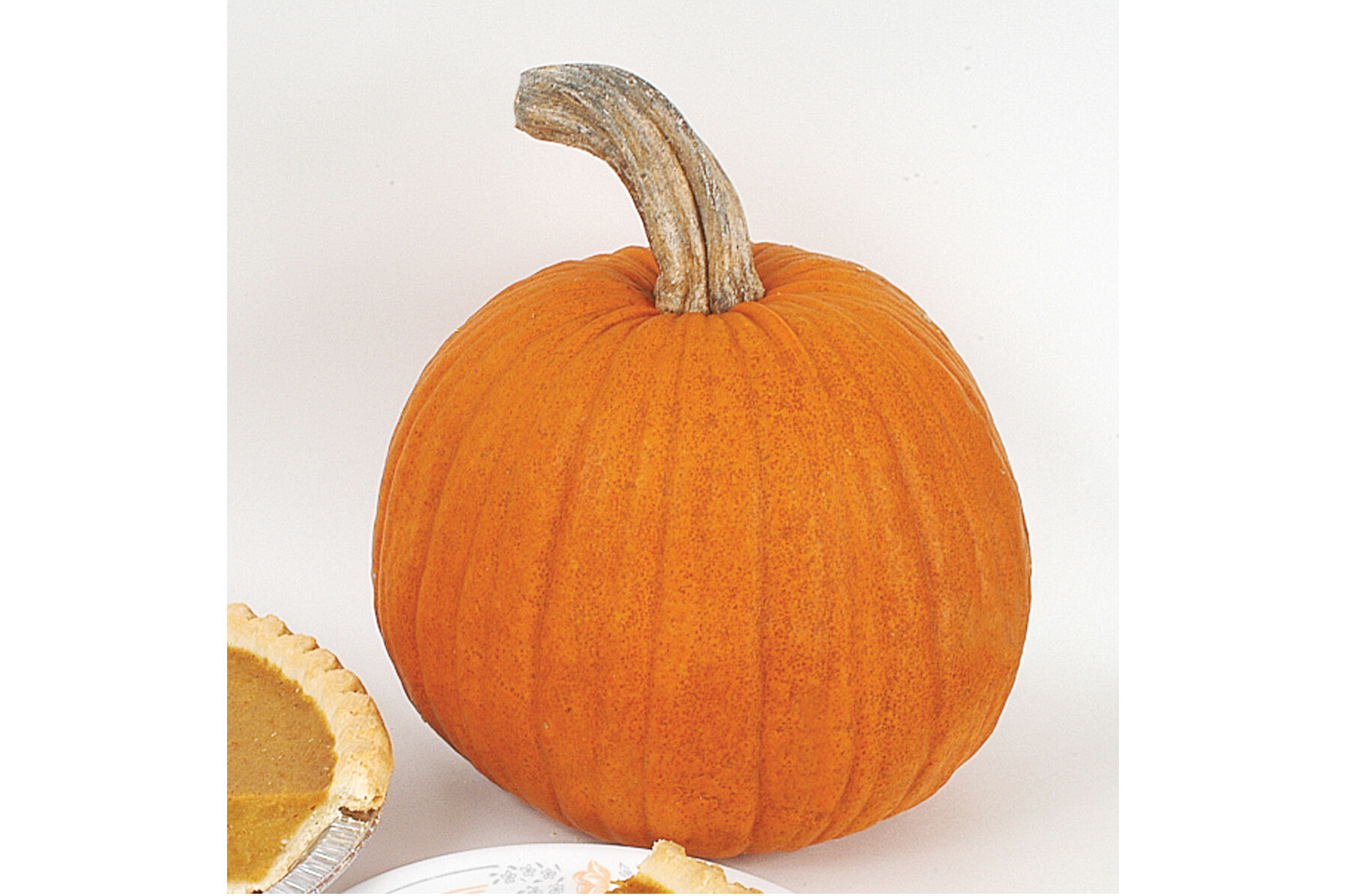 New England Pie Pie Pumpkins