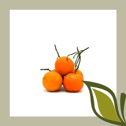 Clementine klein