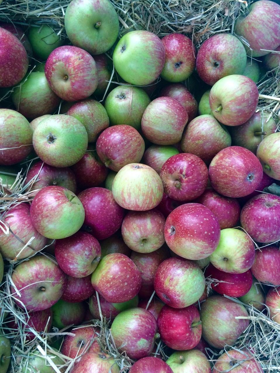 een appelboom op je balkon