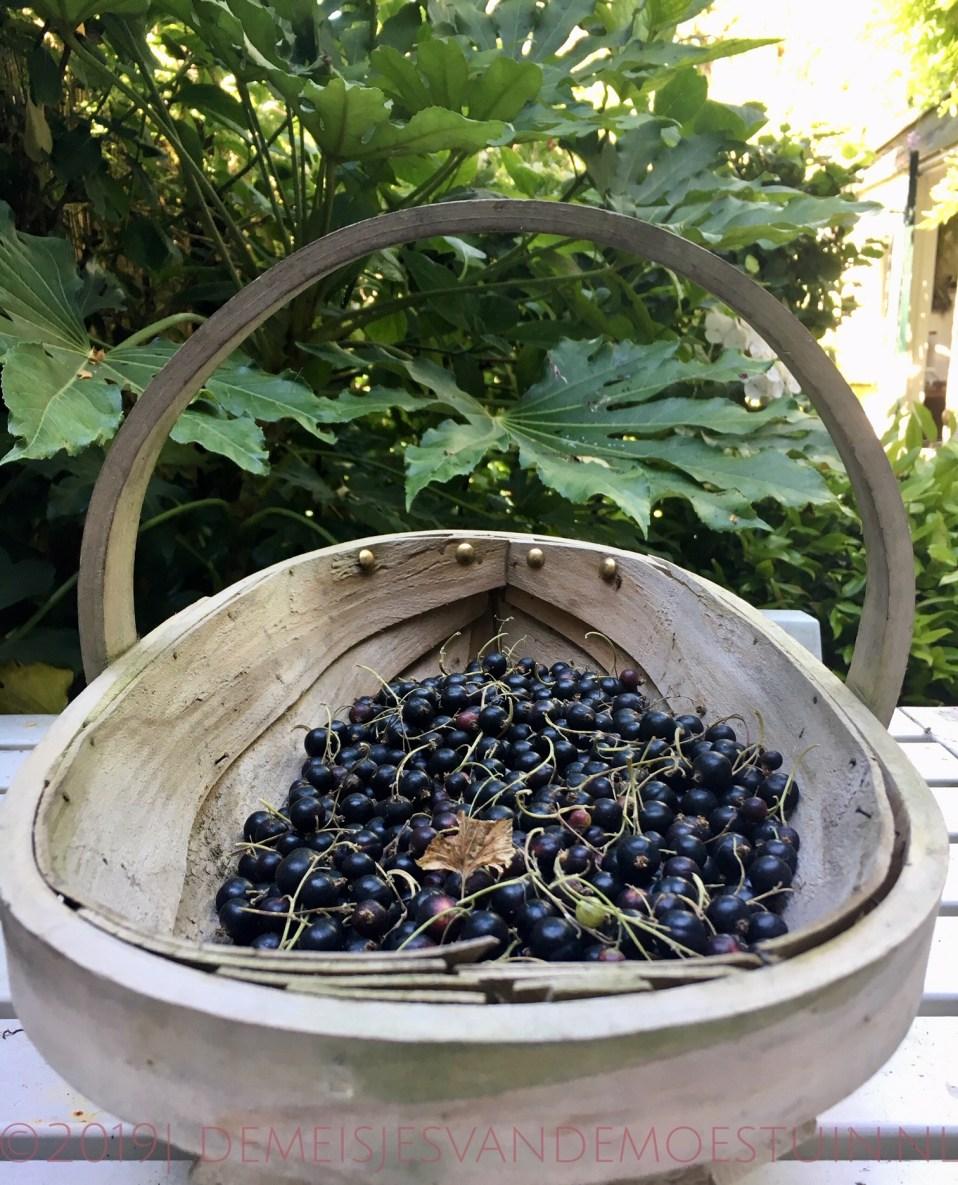 fruit kweken in de schaduw