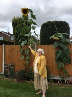2017-sunflower-challenge-7