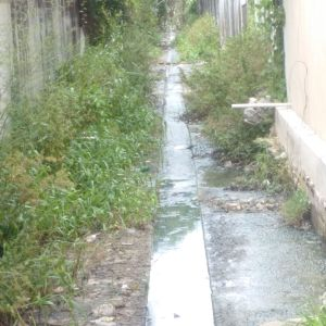 A re-vegetated alley that was recently de-silted and weeded.