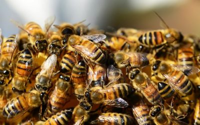 I. Modelo de implementación y certificación de las buenas prácticas pecuarias en la producción de miel