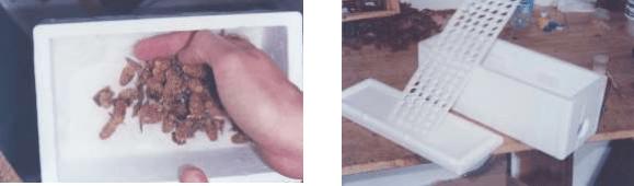 Celdas reales a granel en preparación para transporte, caja de transporte
