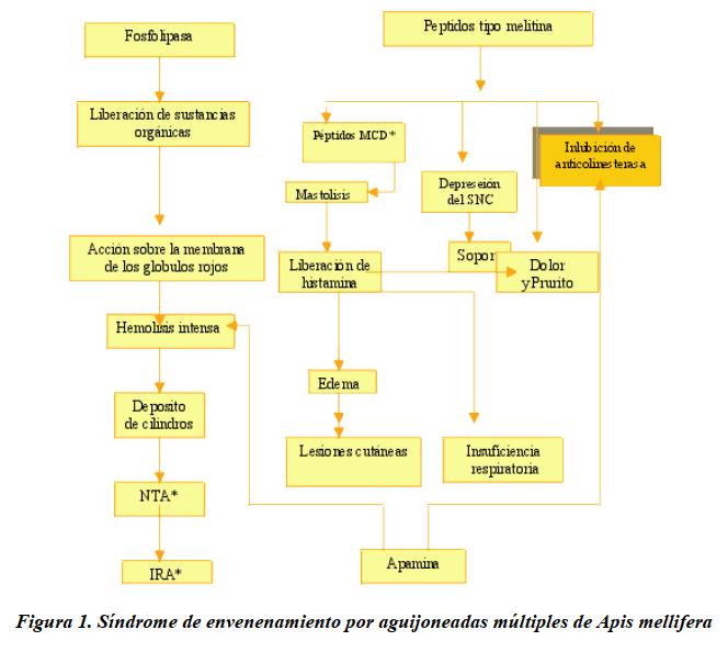 Síndrome de envenenamiento por aguijoneadas múltiples de Apis mellifera