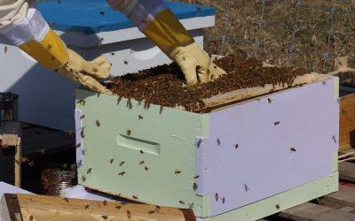 Cuidado con el estrés en tu apiario.