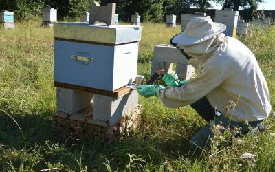Guía de Control biológico contra la Varroa, destructor de colmenas.