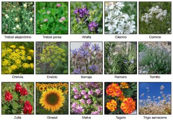 GP_lista-flores-amigas-de-las-abejas