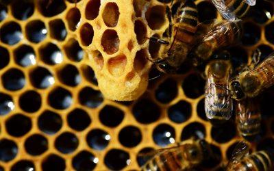 [QUEEN BEE] ¿CUÁNDO CAMBIAR A LAS REINAS?