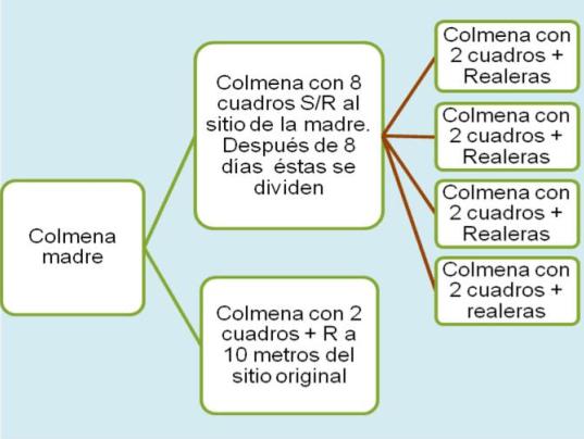 DIVISIONES EN LA COLMENA   MÉTODO DE ABANICO   De Mieles y Abejas