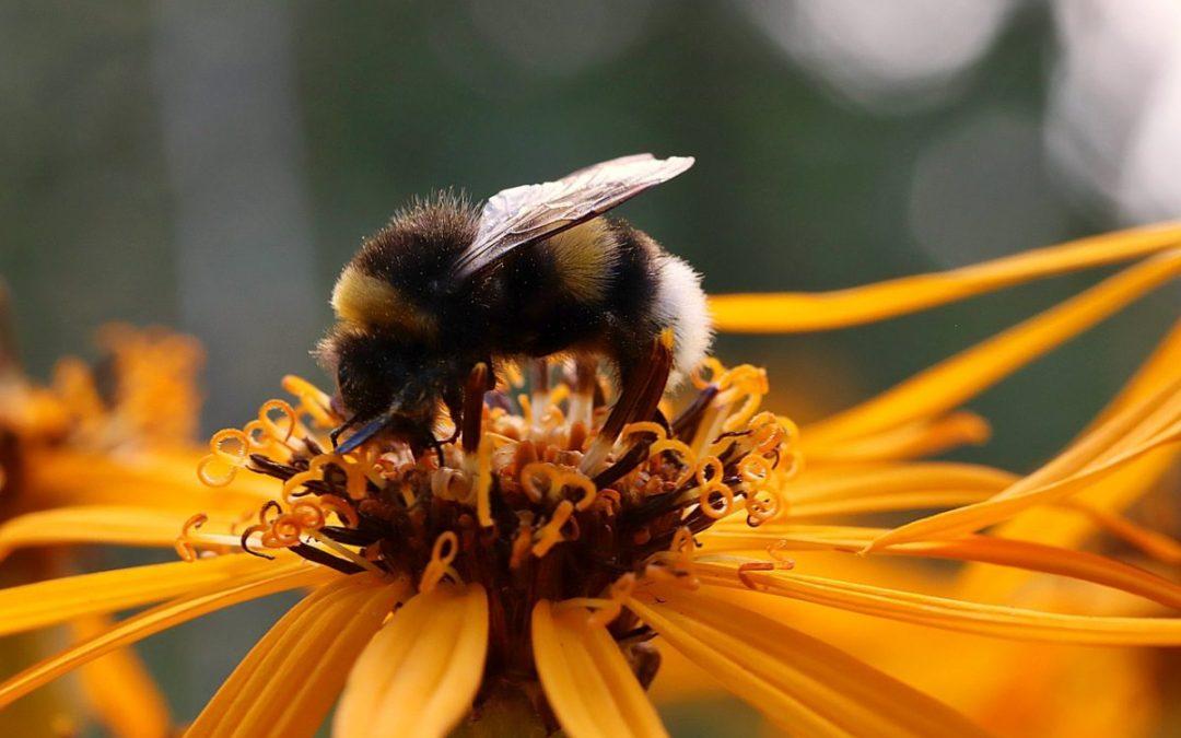 ¿Cómo preparar TORTA PROTEICA para las abejas?   De Mieles y Abejas