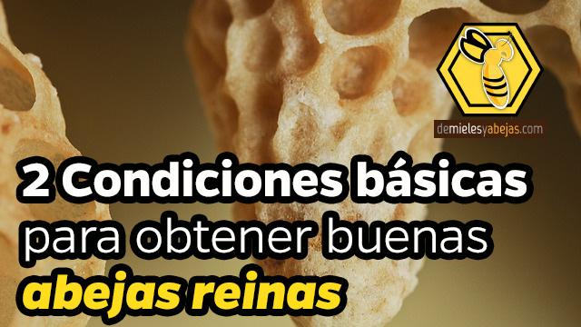 🐝 2 Condiciones básicas para obtener buenas abejas reinas