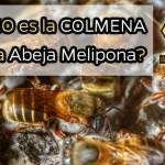 P-meliponas