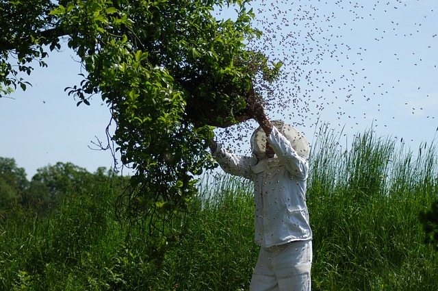 ¿Qué es y cómo se hace el trasiego de colmenas?