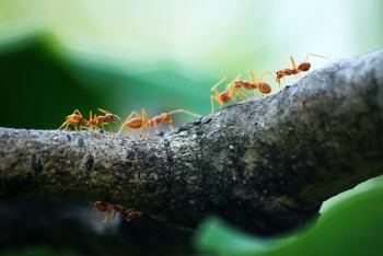 defiende de  Hormigas tu apiario