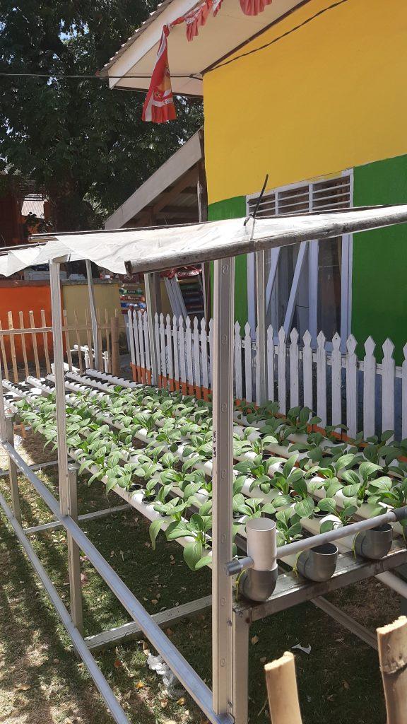 social protection, nutritional garden