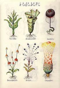 flora. eigentlich möglich.