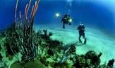 divers-681516_1920