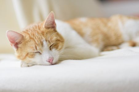 Lazy cat loaded lazily