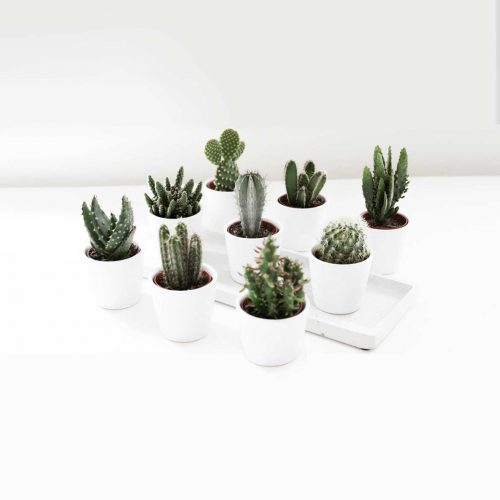 Crate & Barrel Mini Potted