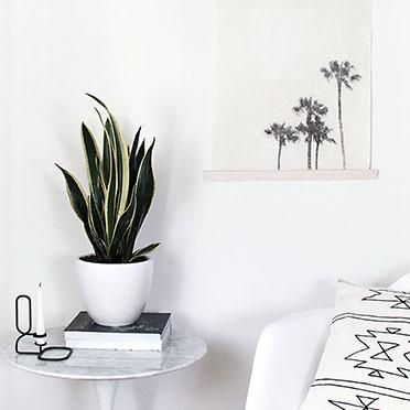 10. Plants 'perfect indoor'