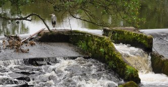 Craigbell Pool at Gartness, near Drymen, where a heron keeps a vigil for salmon making their way upriver.