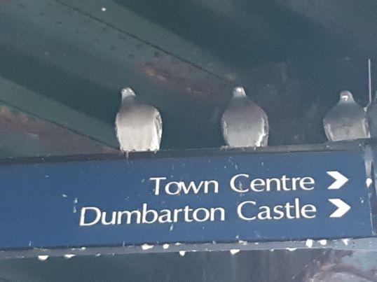 Pigeons under the bridge by Jim
