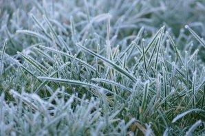 frost 1.jpg 2