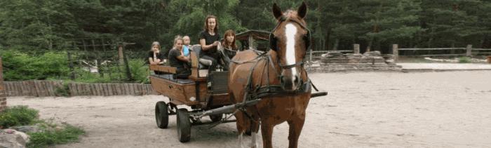 Woźnica to obywatele. Koń to polityk.
